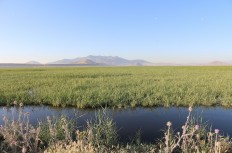 Figure 3. The marsh remnants of the Hotamiş Lake, with Kızıldağ and Karadağ in the background.